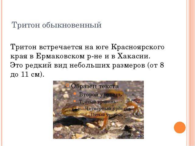 Тритон обыкновенный Тритон встречается на юге Красноярского края в Ермаковско...