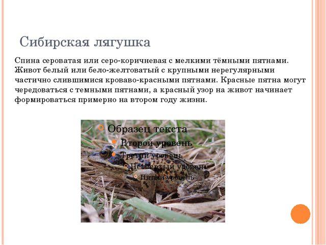 Сибирская лягушка Спина сероватая или серо-коричневая с мелкими тёмными пятна...
