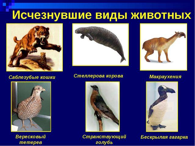 Исчезнувшие виды животных Саблезубые кошки Стеллерова корова Странствующий...