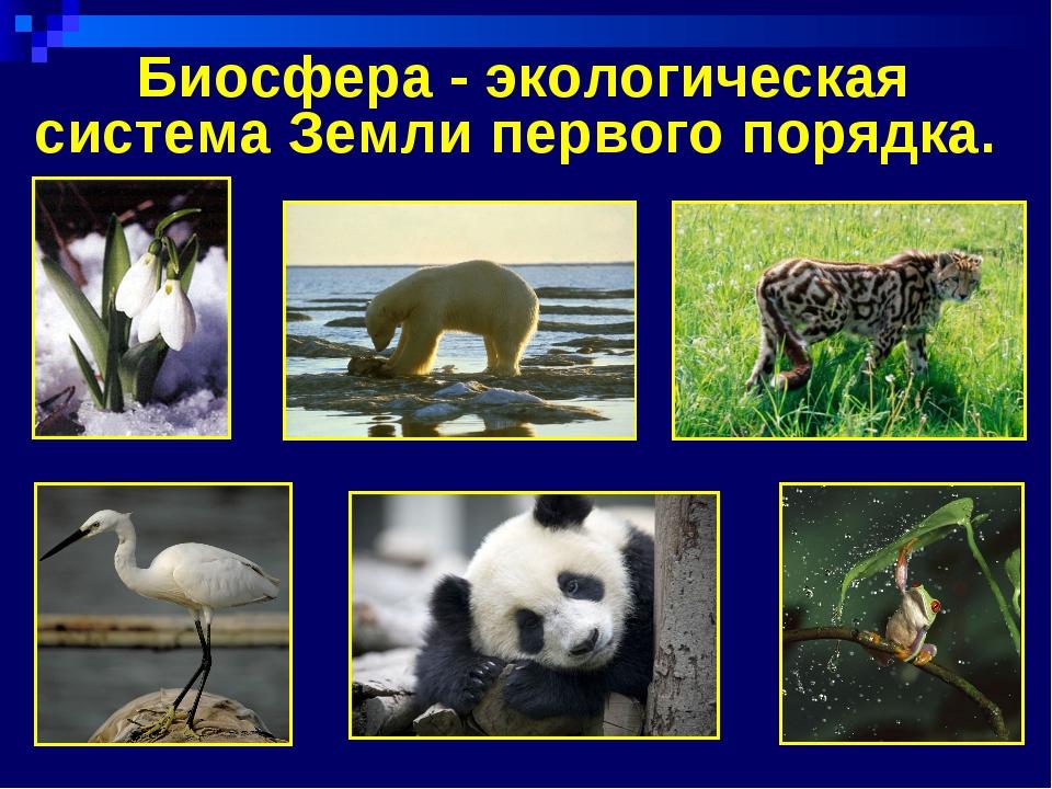 Биосфера - экологическая система Земли первого порядка.