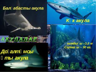 Көк акула Ұзындығы –3,8 м Салмағы – 90 кг. Балғабасты акула А К У Л А Л А Р Д