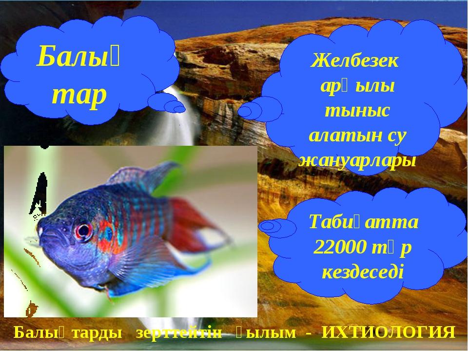 Балықтар Желбезек арқылы тыныс алатын су жануарлары Табиғатта 22000 түр кезде...