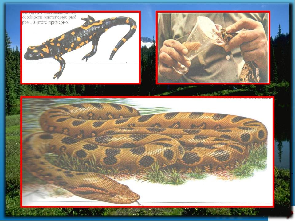 Сабақтың әдісі: Түсіндірмелі көрнекілік Сабақтың түрі: Зерттеушілік тұрғыдағ...