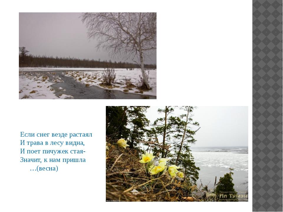 Если снег везде растаял И трава в лесу видна, И поет пичужек стая- Значит, к...