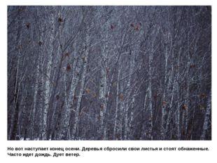 Но вот наступает конец осени. Деревья сбросили свои листья и стоят обнаженные