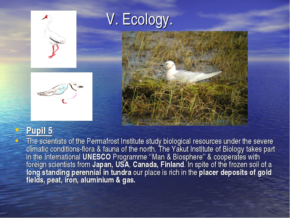 V. Ecology. Pupil 5: The scientists of the Permafrost Institute study biolog...