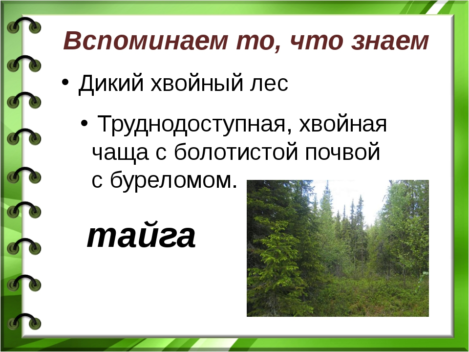 Вспоминаем то, что знаем Дикий хвойный лес Труднодоступная, хвойная чаща с бо...