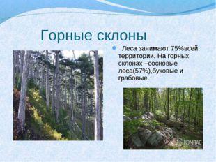 Горные склоны Леса занимают 75%всей территории. На горных склонах –сосновые