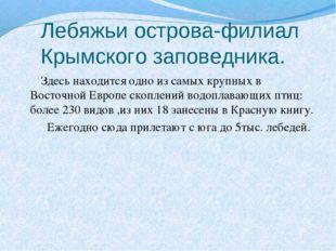 Лебяжьи острова-филиал Крымского заповедника. Здесь находится одно из самых