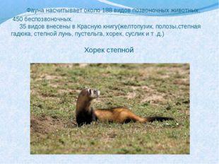 Фауна насчитывает около 188 видов позвоночных животных, 450 беспозвоночных.