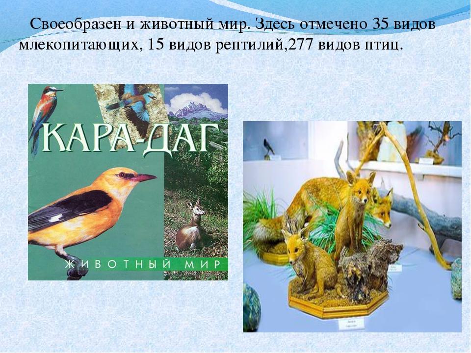Своеобразен и животный мир. Здесь отмечено 35 видов млекопитающих, 15 видов...
