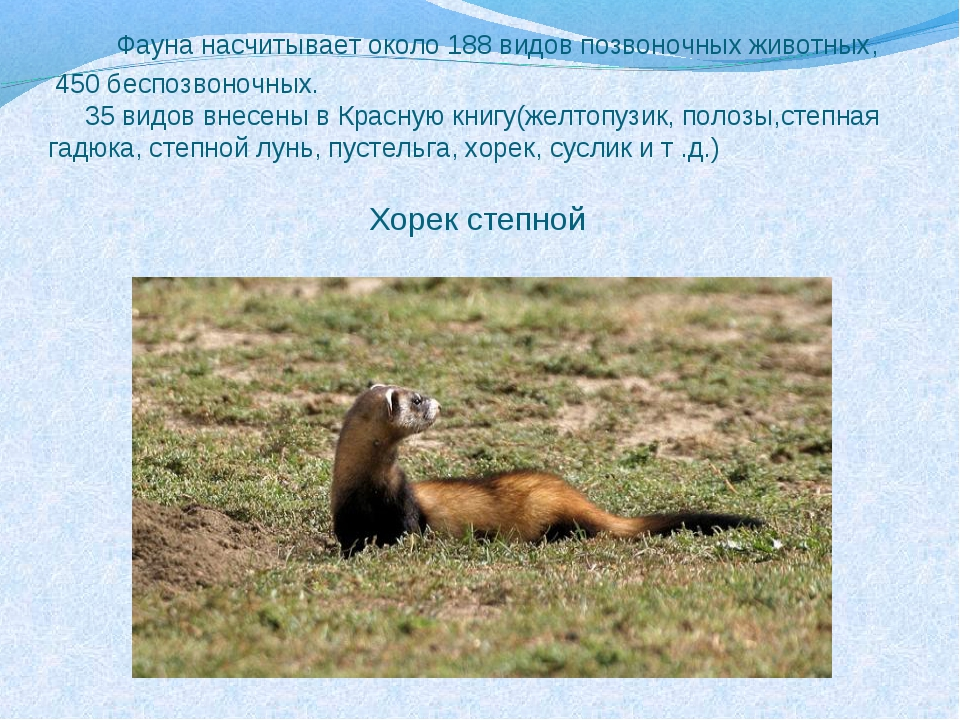 Фауна насчитывает около 188 видов позвоночных животных, 450 беспозвоночных....