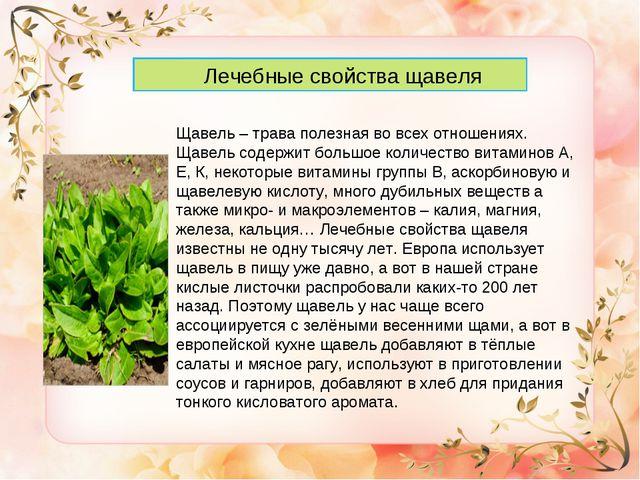Лечебные свойства щавеля Щавель – трава полезная во всех отношениях. Щавель...