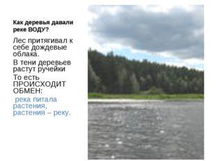 Как деревья давали реке ВОДУ? Лес притягивал к себе дождевые облака. В тени д
