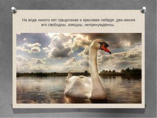 На воде никого нет грациознее и красивее лебедя: движения его свободны, изящ