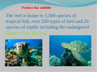Protect the wildlife The reef is home to 1,500 species of tropical fish, over