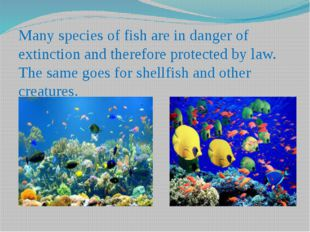 Many species of fish are in danger of extinction and therefore protected by l
