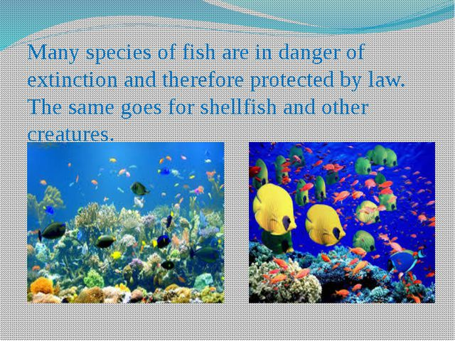 Many species of fish are in danger of extinction and therefore protected by l...