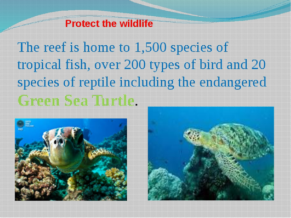 Protect the wildlife The reef is home to 1,500 species of tropical fish, over...