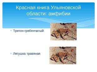 Тритон гребенчатый Лягушка травяная Красная книга Ульяновской области: амфибии