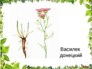 Василек донецкий