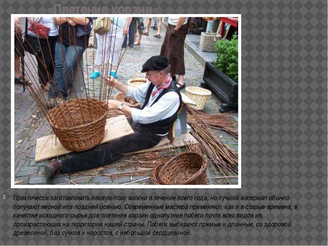 «Плетение корзин» Практически заготавливать ивовую лозу можно в течение всего...