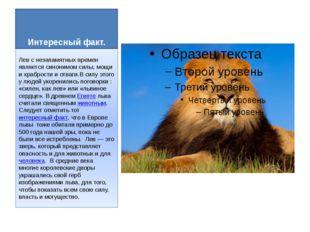 Интересный факт. Лев с незапамятных времен является синонимом силы, мощи и хр