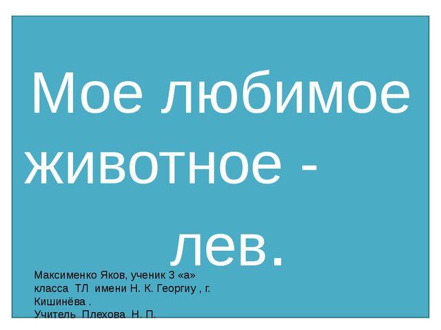 Мое любимое животное - лев. Максименко Яков, ученик 3 «а» класса ТЛ имени Н....