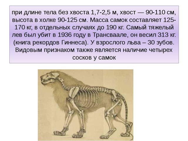 при длине тела без хвоста 1,7-2,5 м, хвост — 90-110 см, высота в холке 90-125...