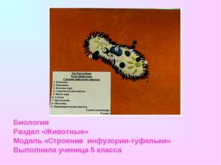 Биология Раздел «Животные» Модель «Строение инфузории-туфельки» Выполнила уче