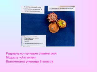 Радиально-лучевая симметрия Модель «Актиния» Выполнила ученица 8 класса