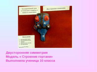 Двусторонняя симметрия Модель « Строение гортани» Выполнила ученица 10 класса