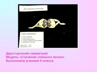 Двусторонняя симметрия Модель «Строение спинного мозга» Выполнили ученики 9 к