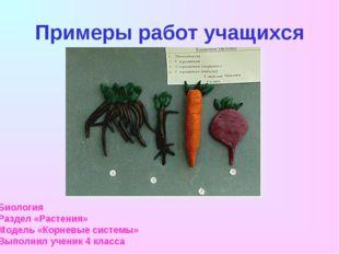 Примеры работ учащихся Биология Раздел «Растения» Модель «Корневые системы» В