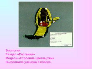 Биология Раздел «Растения» Модель «Строение цветка ржи» Выполнила ученица 5 к