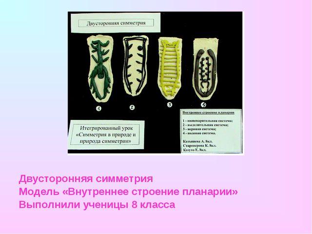 Двусторонняя симметрия Модель «Внутреннее строение планарии» Выполнили учениц...