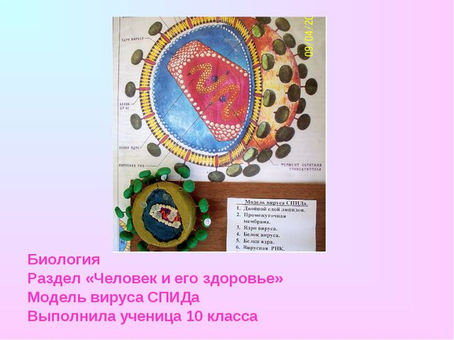 Биология Раздел «Человек и его здоровье» Модель вируса СПИДа Выполнила учениц...