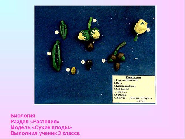 Биология Раздел «Растения» Модель «Сухие плоды» Выполнил ученик 3 класса
