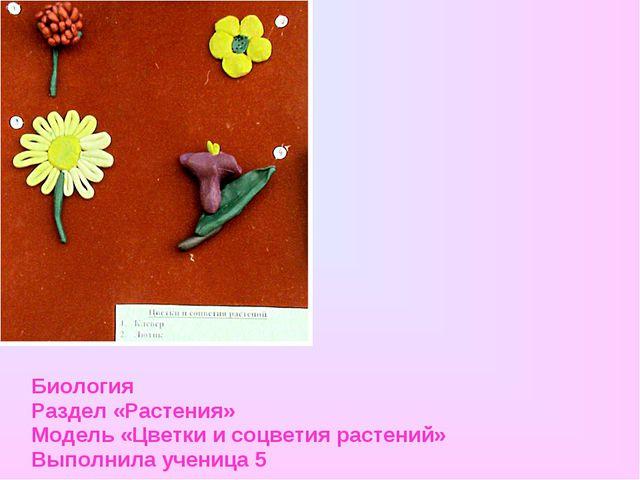 Биология Раздел «Растения» Модель «Цветки и соцветия растений» Выполнила учен...