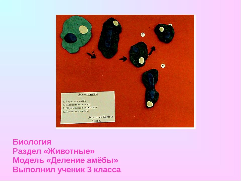 Биология Раздел «Животные» Модель «Деление амёбы» Выполнил ученик 3 класса