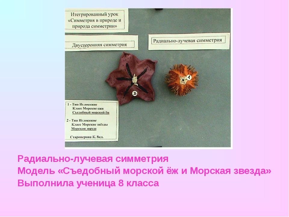 Радиально-лучевая симметрия Модель «Съедобный морской ёж и Морская звезда» Вы...