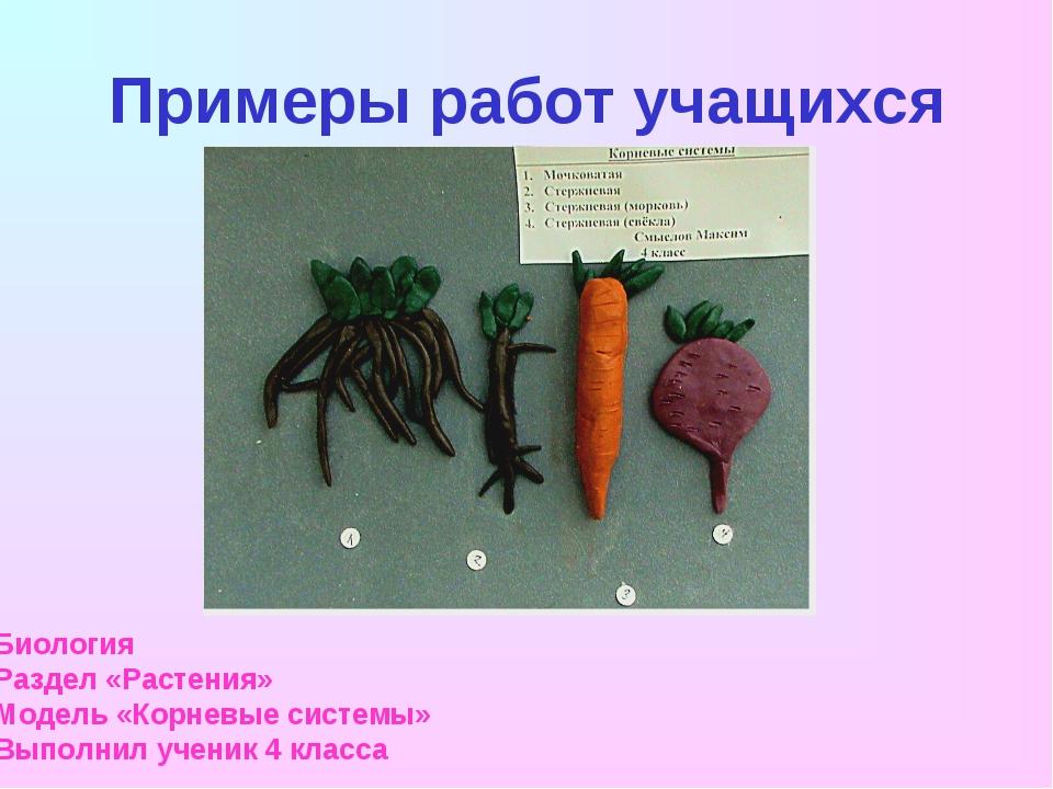 Примеры работ учащихся Биология Раздел «Растения» Модель «Корневые системы» В...