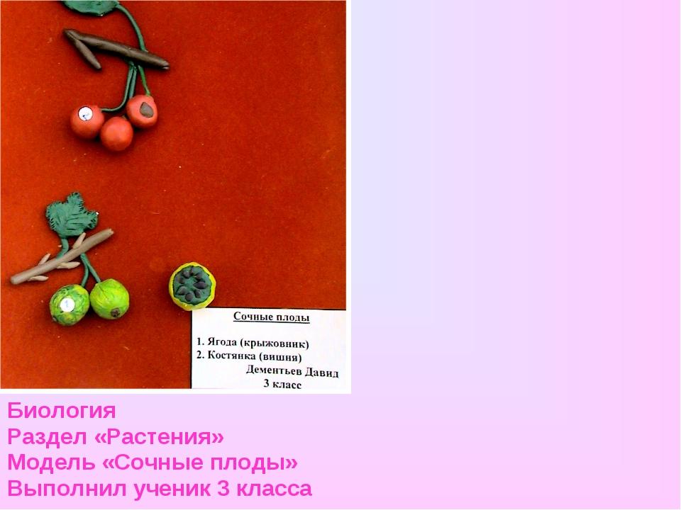 Биология Раздел «Растения» Модель «Сочные плоды» Выполнил ученик 3 класса