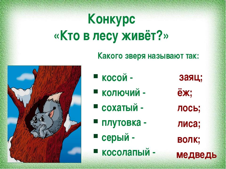 Конкурс «Кто в лесу живёт?» косой - колючий - сохатый - плутовка - серый - ко...