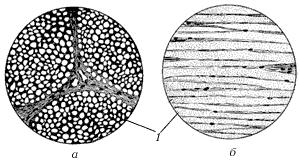 Рис. 7. Эластическая ткань