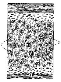 Рис. 10. Эластический хрящ
