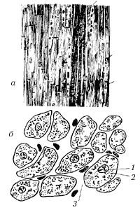 Рис. 12. Поперечнополосатая сердечная мышечная ткань