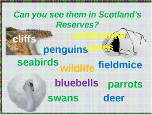 Can you see them in Scotland's Reserves? seabirds penguins wildlife bluebell