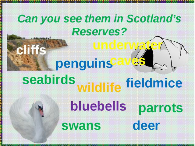 Can you see them in Scotland's Reserves? seabirds penguins wildlife bluebell...
