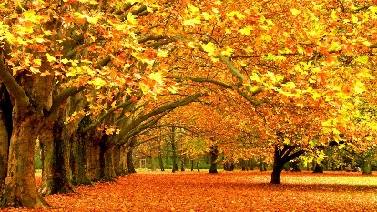 https://www.walldevil.com/wallpapers/w09/fall-nature-yellow-leaves-seasons-weather-trees.jpg